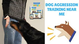 Dog Aggression Training Near Me
