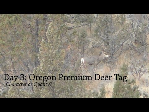 Day 3: Oregon Premium Mule Deer Hunt