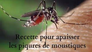 Recette contre la démangeaison des piqures de moustiques ...