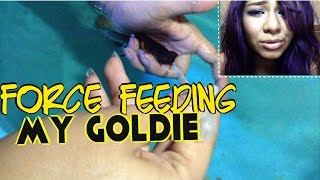 Repeat youtube video force feeding my goldfish