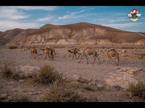 Пересекая иудейскую пустыню и спуск к мёртвому морю. 4х4 18-19/11/2016