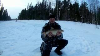 Зимняя Рыбалка Ямал Ноябрьск Еты-пур килограммовые Язи