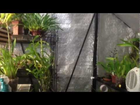 """How to care for Orchids"" Detailed winter greenhouse cool growing Orchid set up, care and culture"
