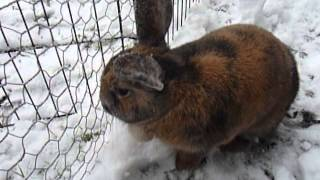Cute bunny playing in the snow