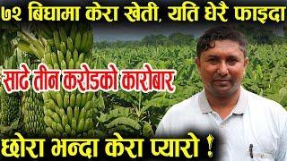 ७२ बिघामा केरा खेती गर्ने किसान, वर्षेनी साढे तीन करोडको कारोबार │Nepal Chitra