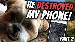 Baixar VLOG | He DESTROYED My Phone - Part 2 | Real Australian English Conversations | Life in Australia