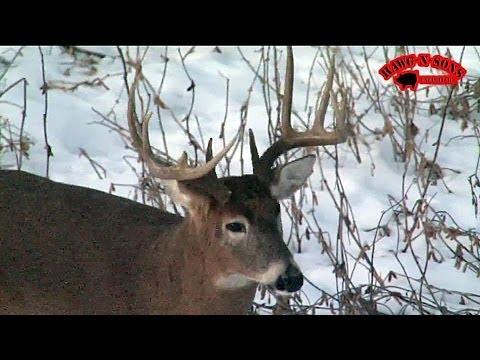 Self Filmed Bowhunting Deer Late Season Snow Big Bucks