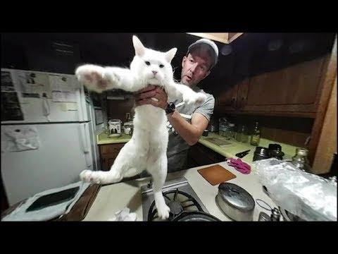 Виртуальный Ужин с Eugene Vlogs #8 Видео 360 Жизнь в Трейлере
