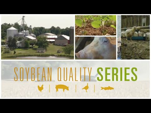 Nutritional Value of Soybean Products for Animal Agriculture