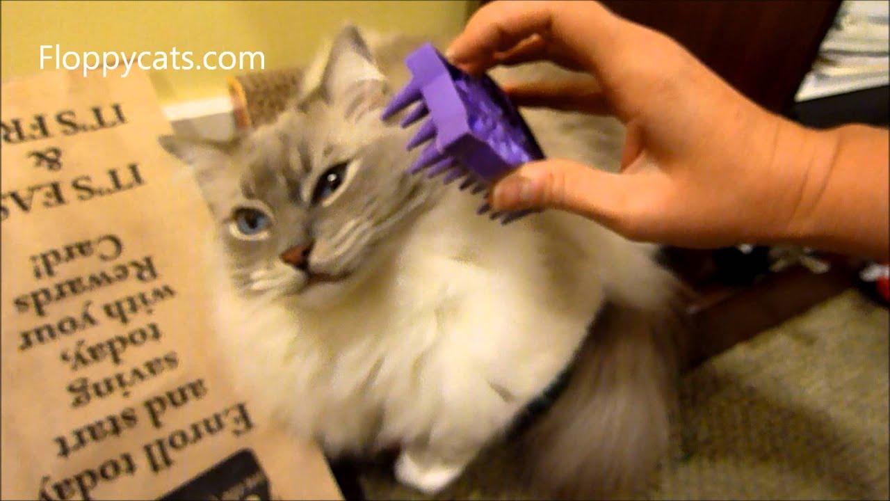 Ragdoll Cats Meet KONG Zoom Groom Cat Brush ねこ ラグドーãƒ