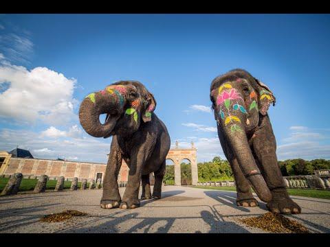 Des éléphants à son mariage  Mariage bollywood de Cinéma Evénement  Animalier