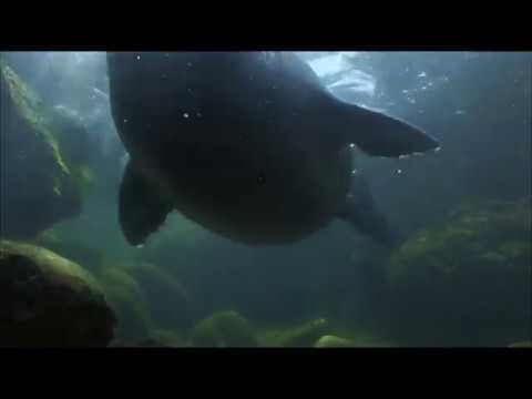 Дикая природа России  Cибирь   National Geographic Full HD 1080
