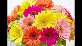 How to make Easy flowers - gerbera paper flower (Very Easy) / Flores de papel / DIY Regalo para mamá