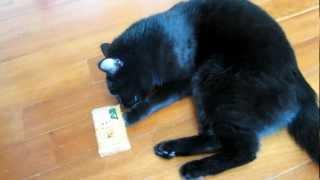 Кошка Тина и оливковое мыло - 1
