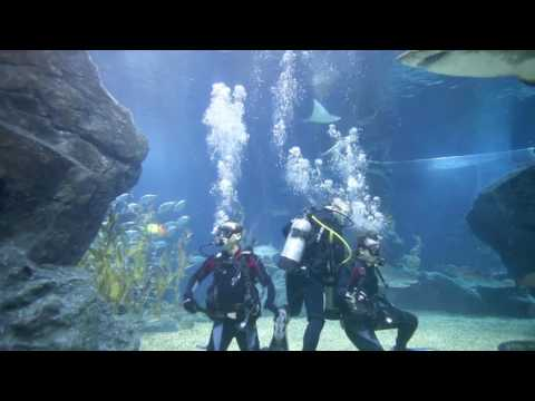 Scuba Diving In Siam Ocean World - Thailand
