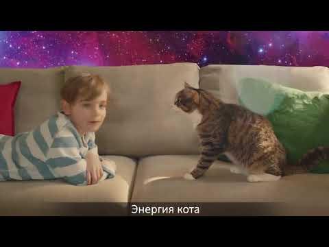 Cекрет энергии – Kitekat® feat  Кот Борис 10 Часов Китекет нашёл шёл шёл