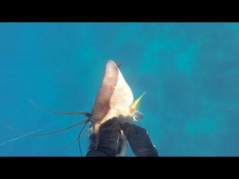 Chasse sous marine en Martinique - côte caraïbes / Spearfishing Martinique - West coast | Volume 2