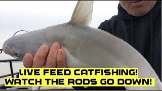 LIVE CATFISHING! Watch the rods and get some catfishing tips!