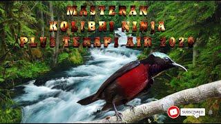 Download Mp3 Masteran Kolibri Ninja Plus Terapi Air 2020