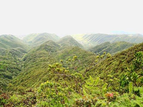 howzitboy hikes:Kulipeamoa to Hawaii loa ridge loop