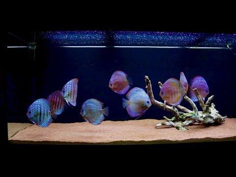 New Aquascape 120 Gallon Discus Fish Tank | Juwel Rio 400