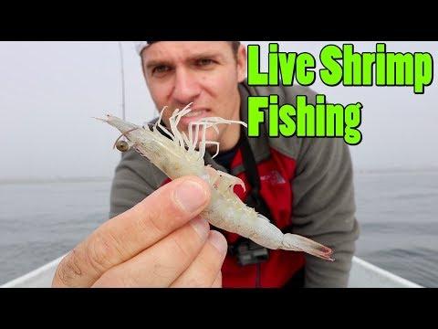 Using Live Shrimp To Catch A Fish EVERY Cast