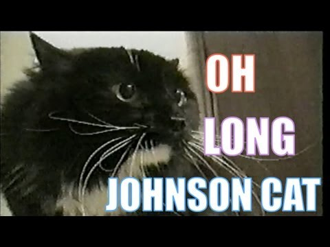 "Talking Cat Saying ""Oh Long Johnson"""