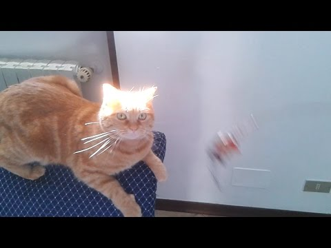 Orange Tabby Cat Plays With Rudimental Fishing Pole Toy - SISSI THE RED CAT