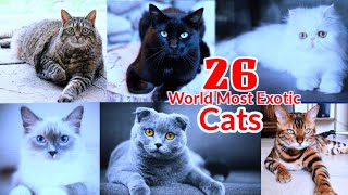 LET'S LEARN A to Z WORLD MOST EXOTIC CAT BREEDS | EXOTIC CATS | EXOTIC CAT BREEDS | LEARN ALPHABET