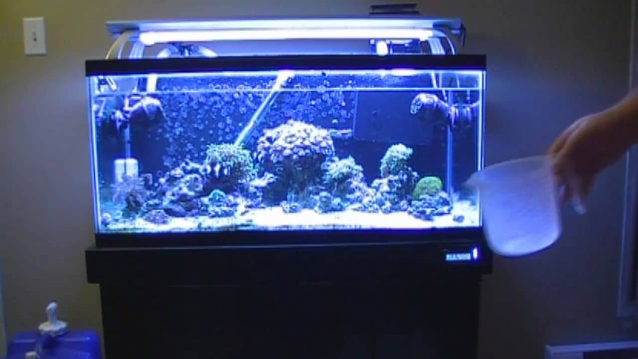 Easy water change for your saltwater aquarium youtube for How to keep fish tank clean without changing water