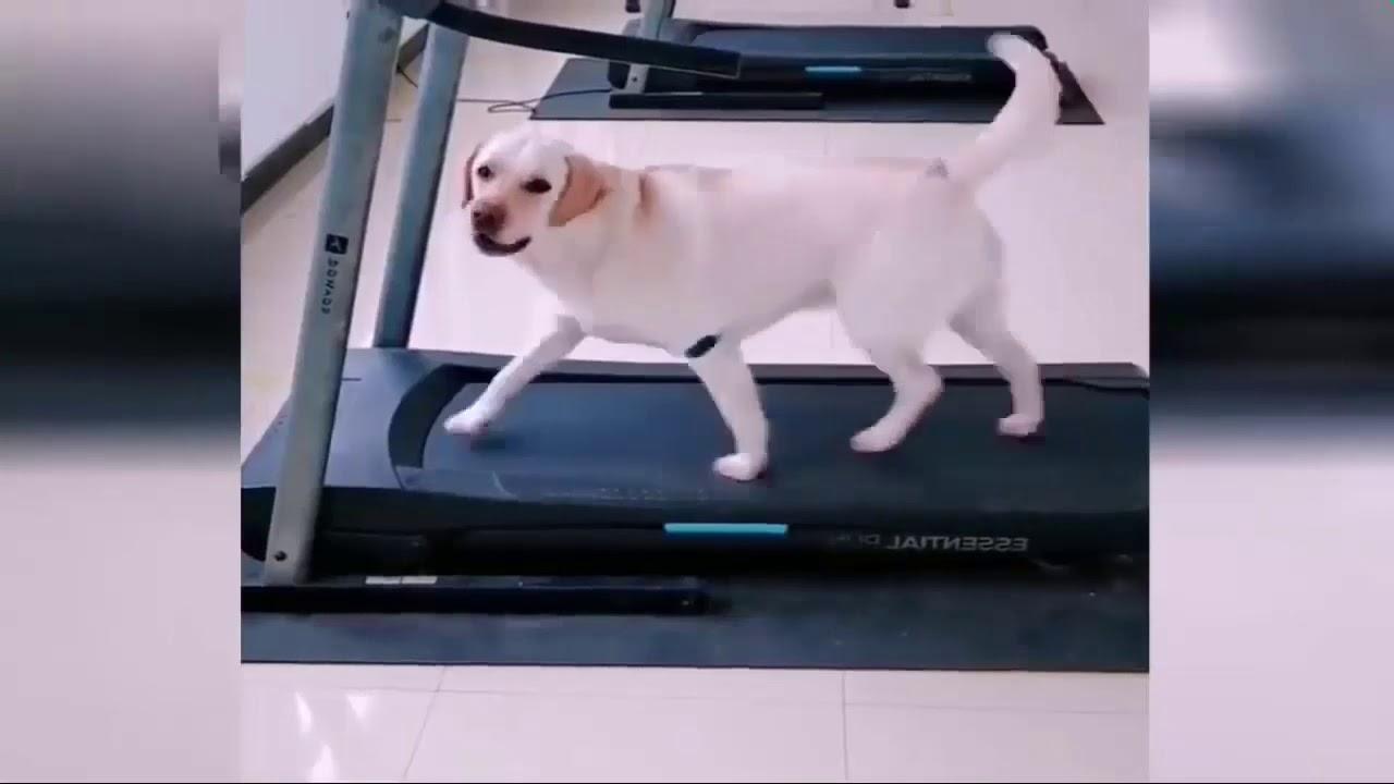 Собака и кошка - YouTube