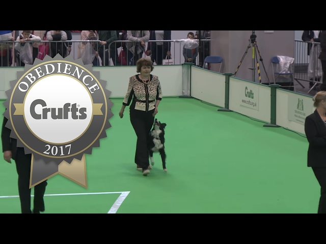 Obedience Championship - Bitches - Part 7 | Crufts 2017