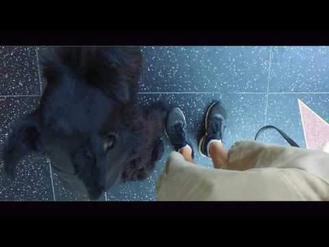 The Most Amazing 1 Day Transition Video!  Chef! Nick White | Celebrity Dog Trainers