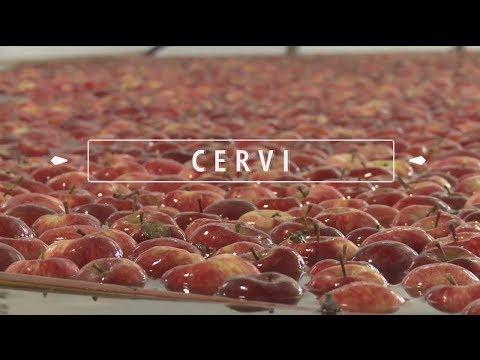 Cervi: Emprender es un modo de vida