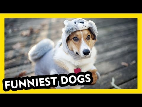 Funniest DOG Compilation Ever - part 1