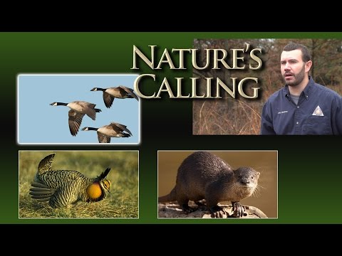 Nature's Calling: Call of the Wild (Dec 2016)