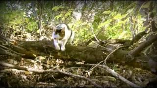 Обыкновенная история обыкновенной кошки