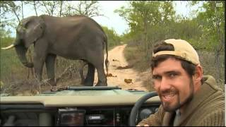 11-16-2015 WildEarth SafariLive Sunset - Bull Elephant comes to investigate Scott