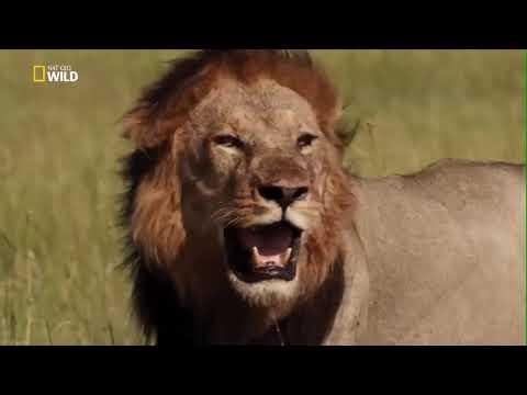 Ölümcül Avcılar Afrika Belgesel TV