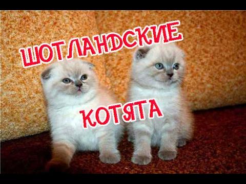 Главная ПАПА МАМА сайт для родителей Иркутска и области