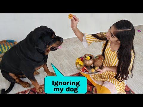 My dog needs attention  bhai dooj special  rottweiler dog.