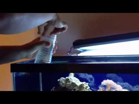 Getting A 6 Line Wrasse Out Of My Tank Fish Trap