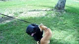 Miami Dog Training / Dog Aggression Control- K9 Enforcement