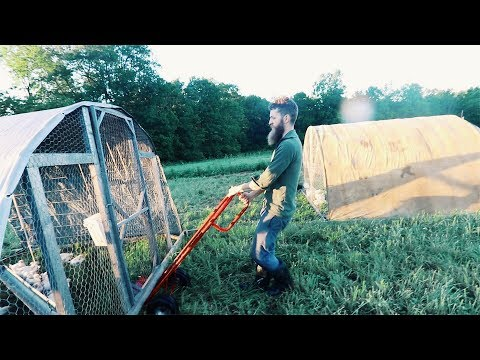 Easily Move 160 MEAT chickens (With Hand Trucks)