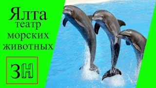 Ялта.Театр морских животных Акватория.Крым.