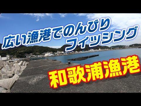 【釣り実況】和歌浦漁港の紹介 和歌山県の広々漁港