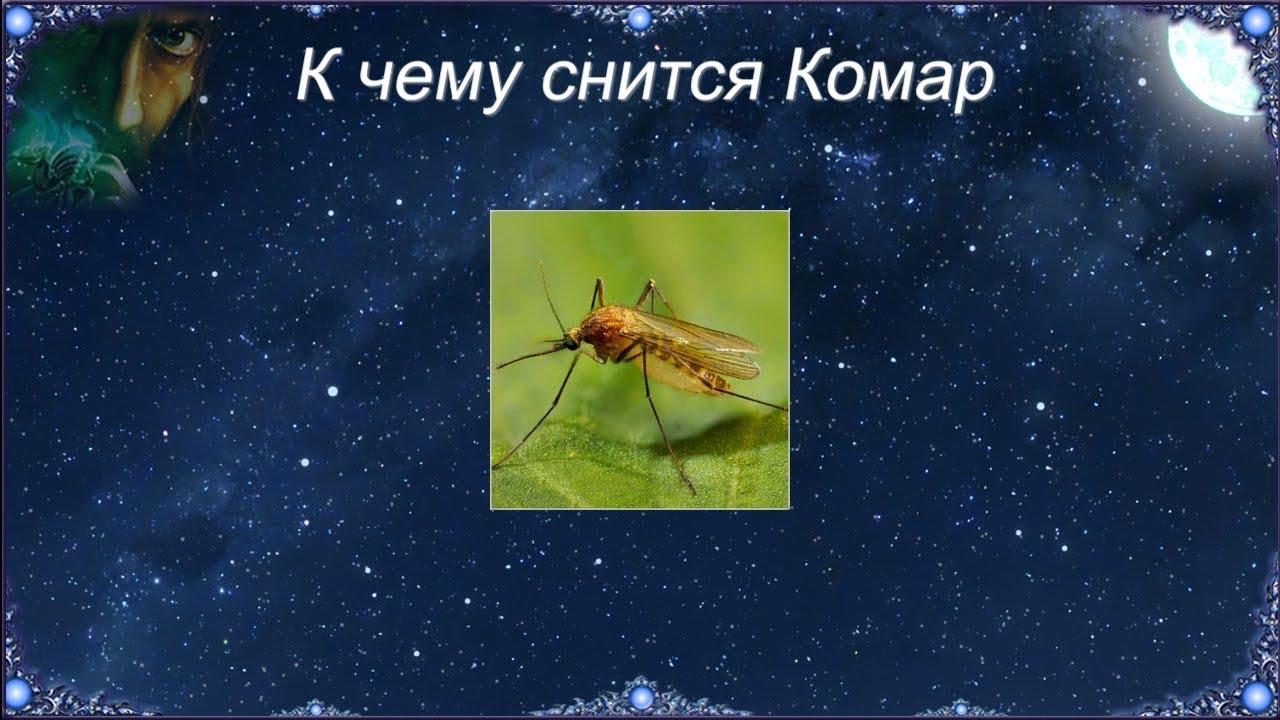 К чему снится Комар (Сонник)