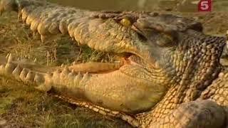 Вторжение крокодилов