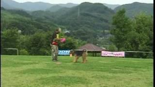 Hiro&Matra Team DISC DOG FREE STYLE.