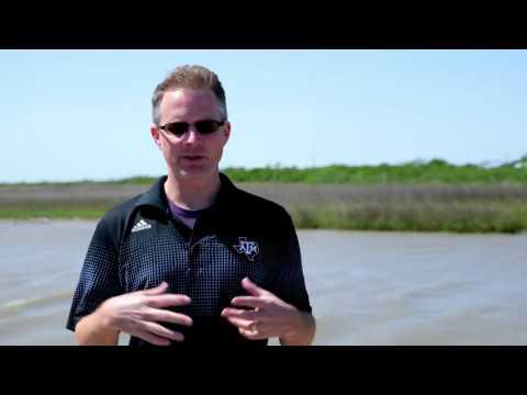 2016 TEEA Winner Civic/Community: Texas A&M AgriLife Research, Beach and Marsh Restoration